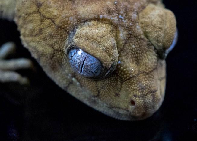 Julie Powell_Gecko-3
