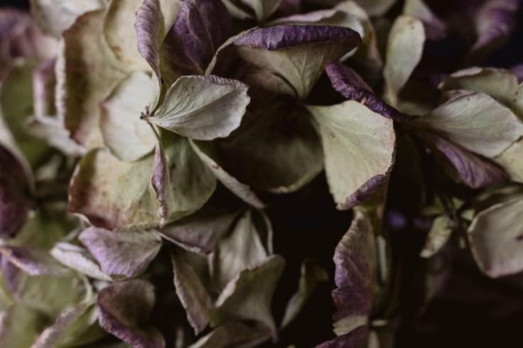 Julie Powell_flowers-5