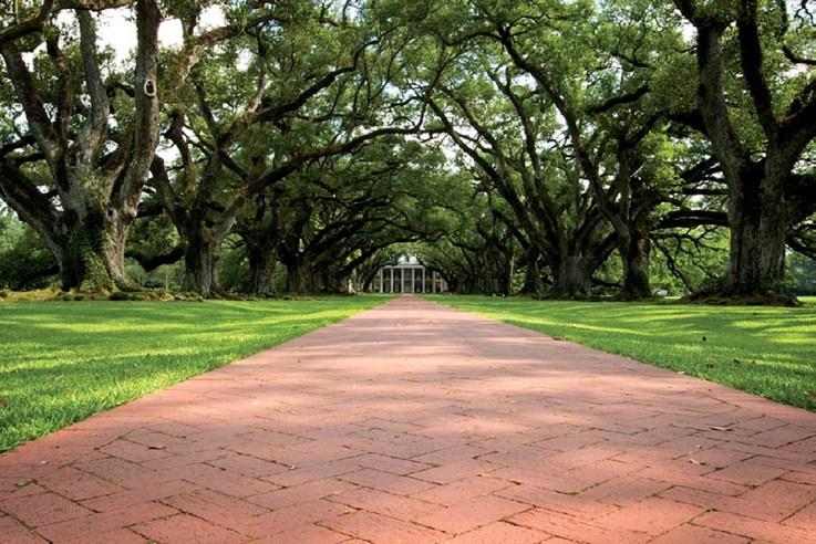 Oak Alley Plantation, Vacherie, Louisiana ISO 100; 1/4 sec.; f/22; 20mm