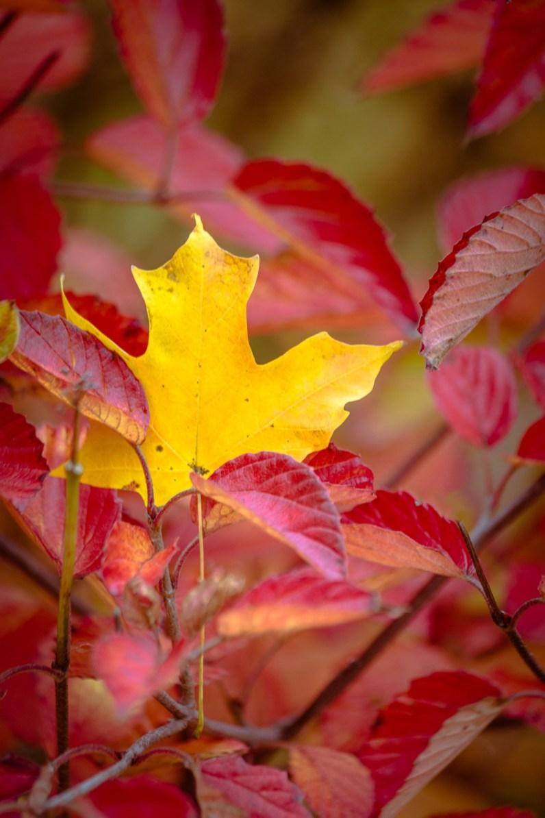 fall yellow leaf