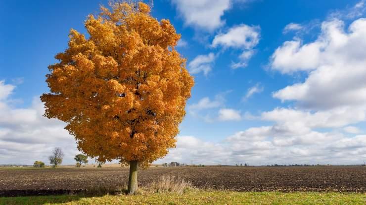 fall tree in field