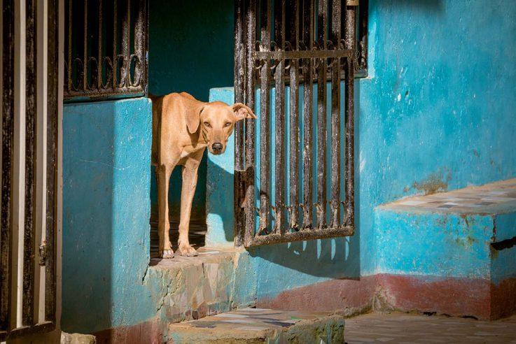 Stray dog San Juan del Sur, Nicaragua ISO 100; 1/200 sec.; f/4.5; 24mm