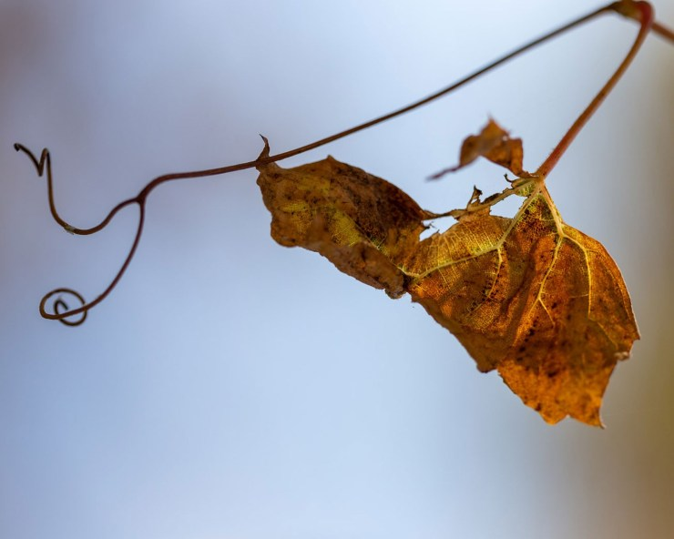 clear background leaf on tree fall photo