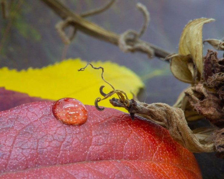 drop on fall leaf macro photo