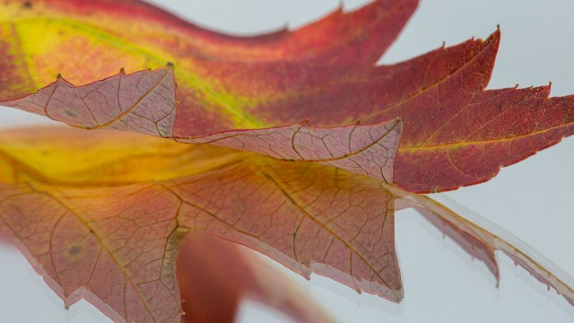 Photographing fall leaves with your macro lens indoors