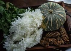 Julie Powell_NL Pumpkins-06747