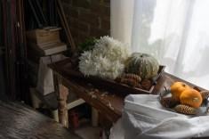 Julie Powell_NL Pumpkins-06752
