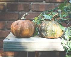 Julie Powell_Pumpkins-2747