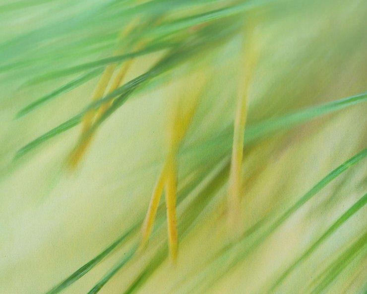 fall pine needles macro photo