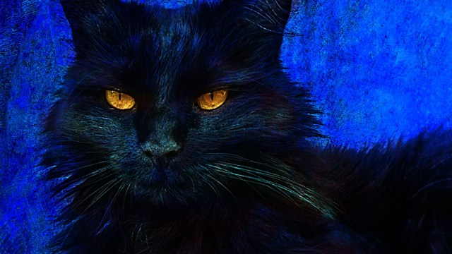 How to modify a black cat with Photoshop