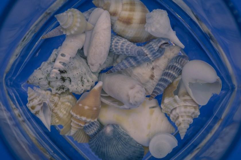 seashell macro