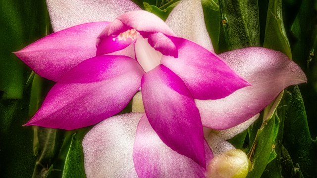 Focus stacking to achieve greater depth of field, part two