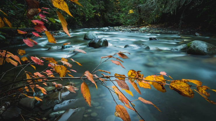 Six tips to capture autumn colors