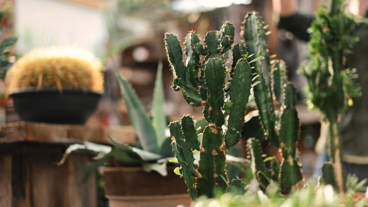 Backlighting plants