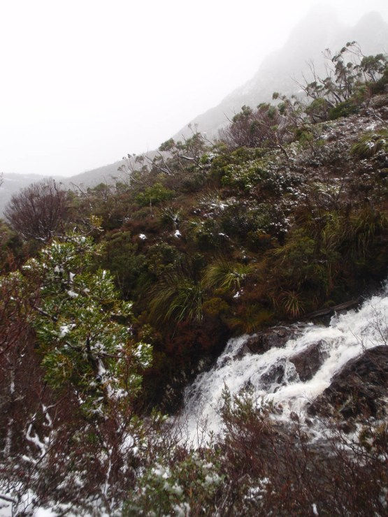 Alpine stream Cradle Mountain