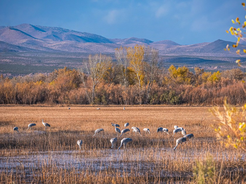 Bosque del apache NWR photo