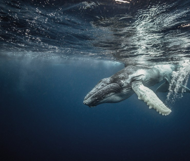 Amazing Photography: Real stories to inspire us all