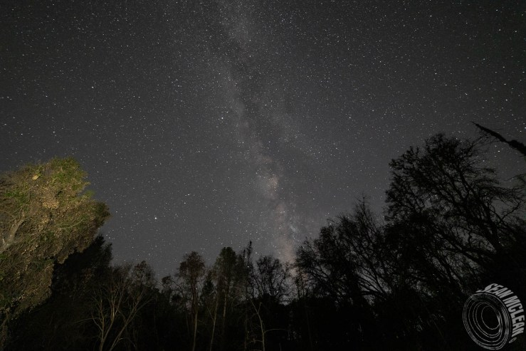 light painting trees with Milky Way