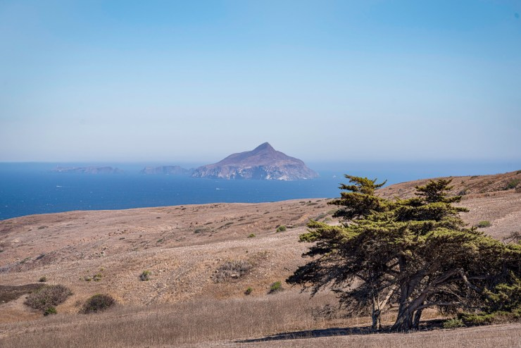 Anacapa Island wrapped on fog, appearing over a small grove of Cypress Trees, as seen from Santa Cruz Island in the Channel Islands.