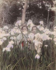 Kozaburo TAMAMURA Jeunes filles dans les iris - vers 1880