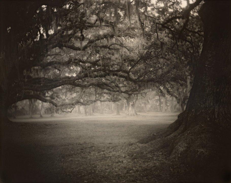 Sally Mann -  série Deep South - Untitled (Fontainebleau) - 1998