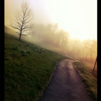 Biltmore Estate in Asheville, NC Morning Walk