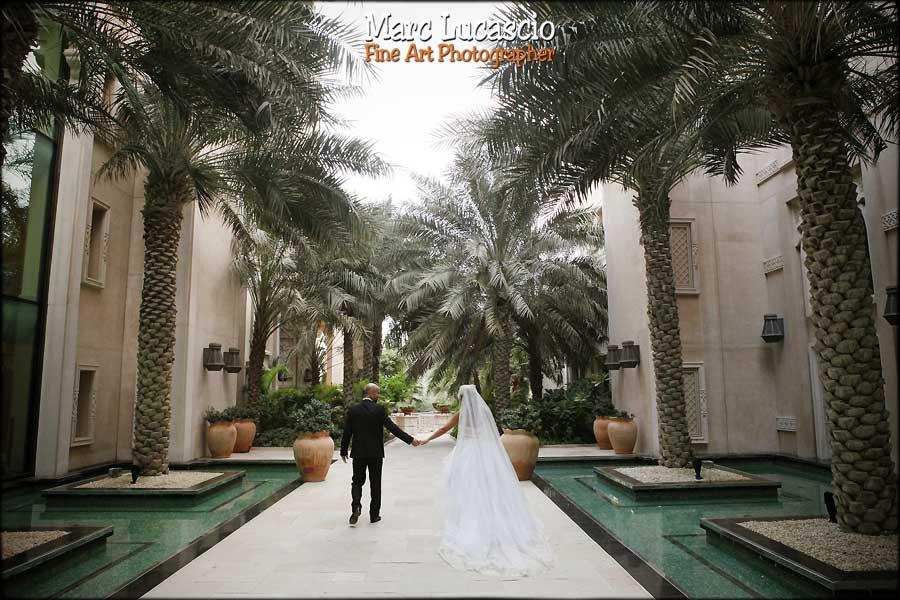 Dubaï photo haie de palmier