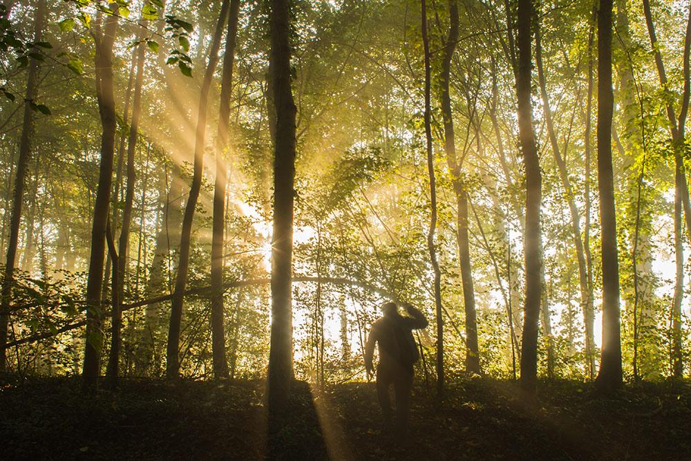 kirchberg forest