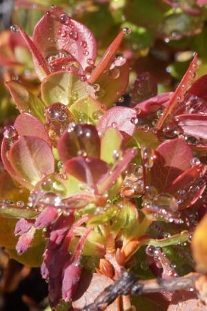 Macro Droplet Photography