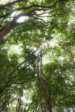 Wandering Upcountry Maui