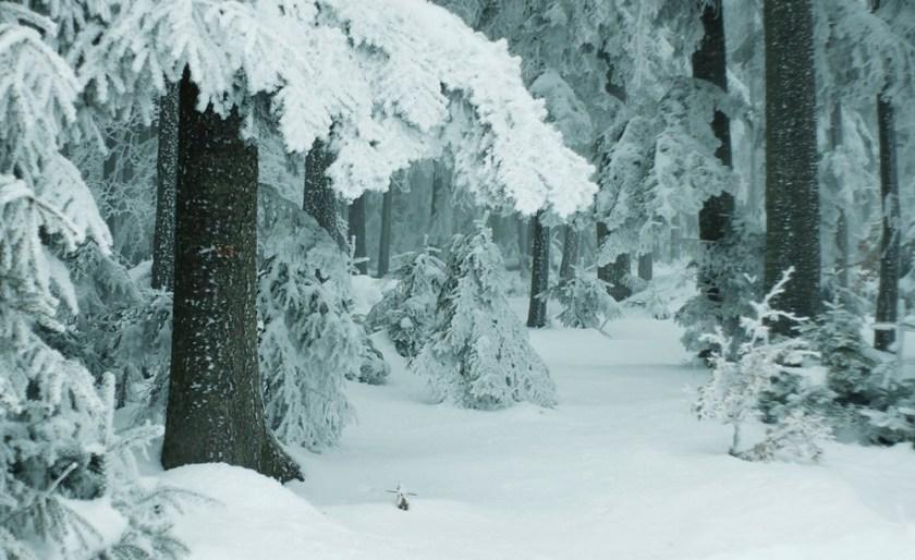 Картинки по запросу зимовий ліс