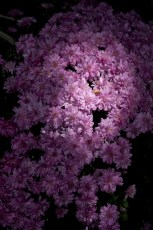 Photographers of Las Vegas - Wedding Photography - wedding details flowers