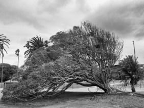 St Kilda Forshore