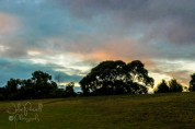 Dawn over Prospect Hill Reserve-8