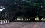 Trees-0434
