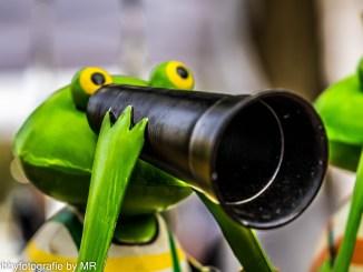 Frosch mit Fernglas