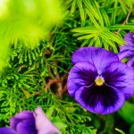 Purple on Green - Dayton Photographer Alex Sablan