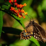 Butterfly House - Dayton Photographer Alex Sablan