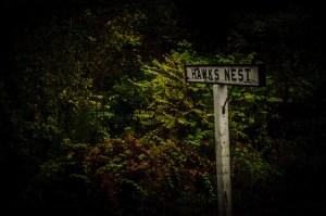 Hawk's Nest, WV - Dayton Photographer Alex Sablan