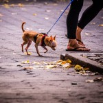 Hudson River Walk Chihuahua - Dayton Photographer Alex Sablan