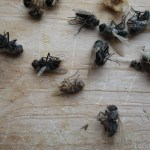Dead Flies and Ladybugs