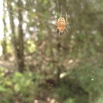 Orange Spider and Web