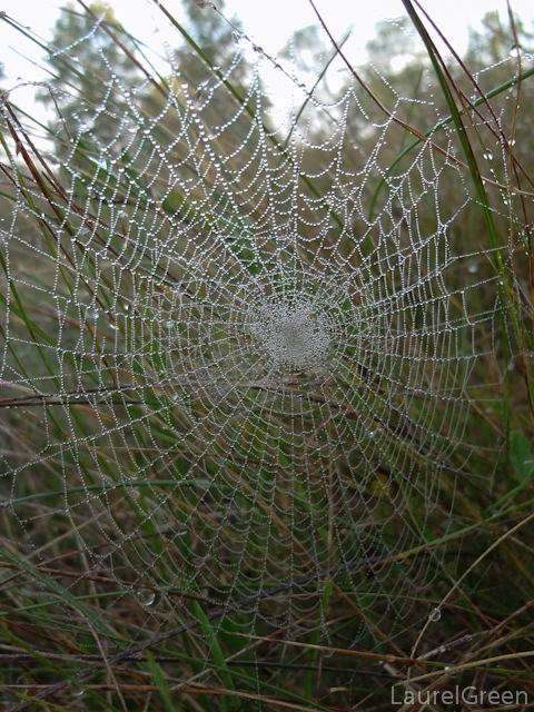 a photograph of a spider web covered in dew