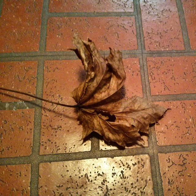 a photo of a dead leaf sitting on a brick floor