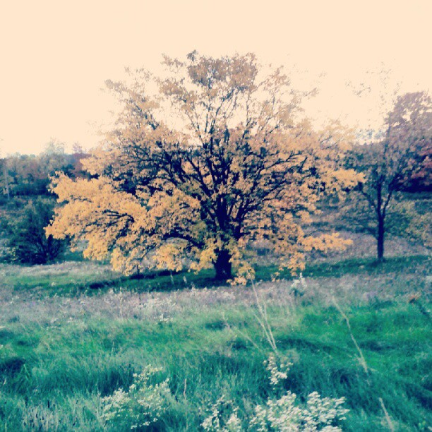 a photo of a tree with its leaves turning orange for fall