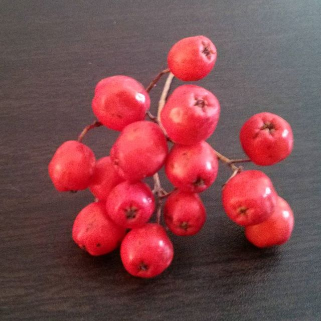 a closeup photo of some rowan berries