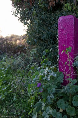 I like the echo of the two purples as nature and University making their mark.