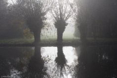 I have better images of mist through the trees further up the river. But this shows some of the charm of the place.