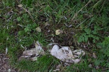 Bench 2: Field 7