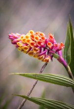 beautiful flowers on the Inca trail